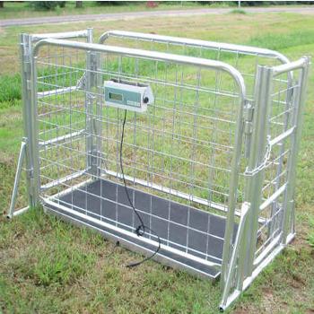 livestock scales 1