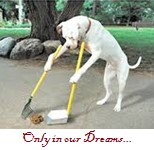 Barns - Manure Cleanup tools - Dog Cleaning Poop Dream